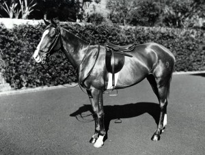 Horse on parade, Bellevue Hill. Digital ID: 4481_a026_000643