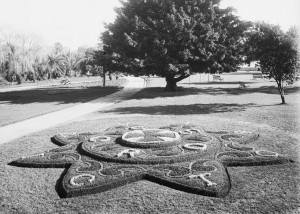 Anzac Victoria Cross flower bed, Botanic Gardens, August 1916. From NRS 4481 image MS4038P.